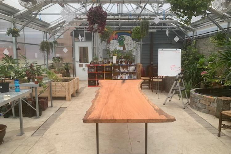 Ten Foot Red Oak Slab for School Greenhouse
